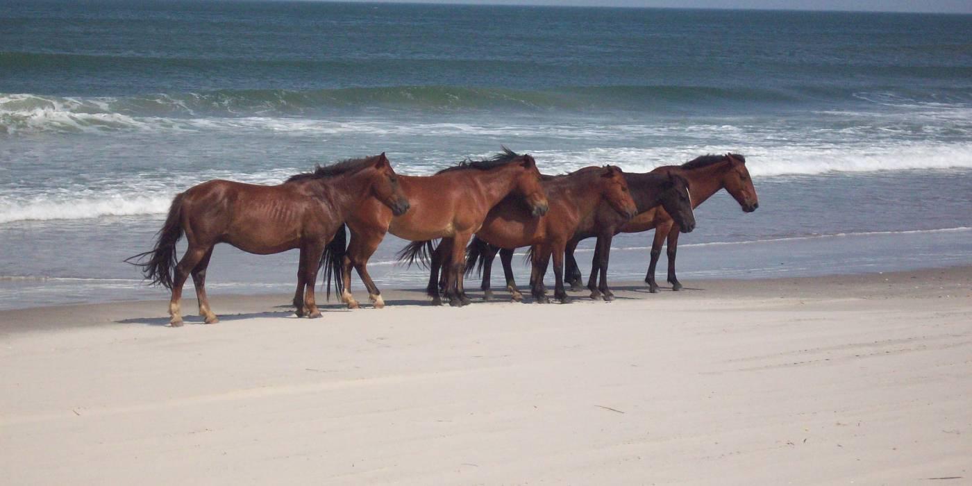 Vacation Rentals In Swan Beach Nc