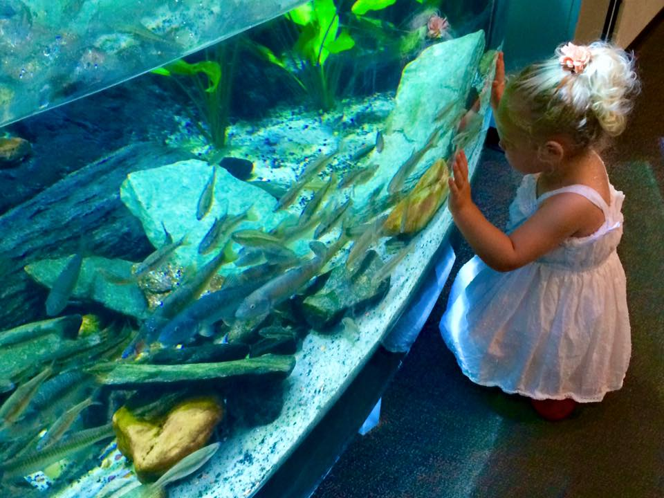 Activities for Kids - NC Aquarium OBX
